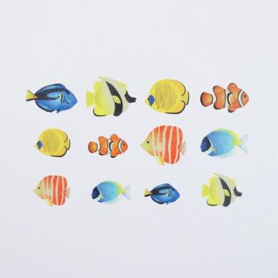 画像3: bande 熱帯魚