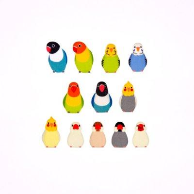 画像3: bande 文鳥とインコ